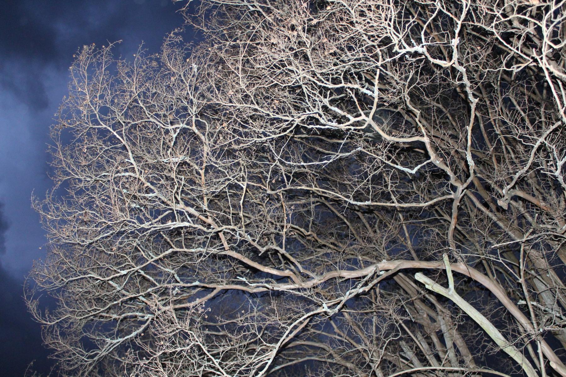 Neurons-6